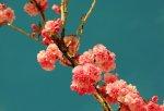 nástěnné květiny